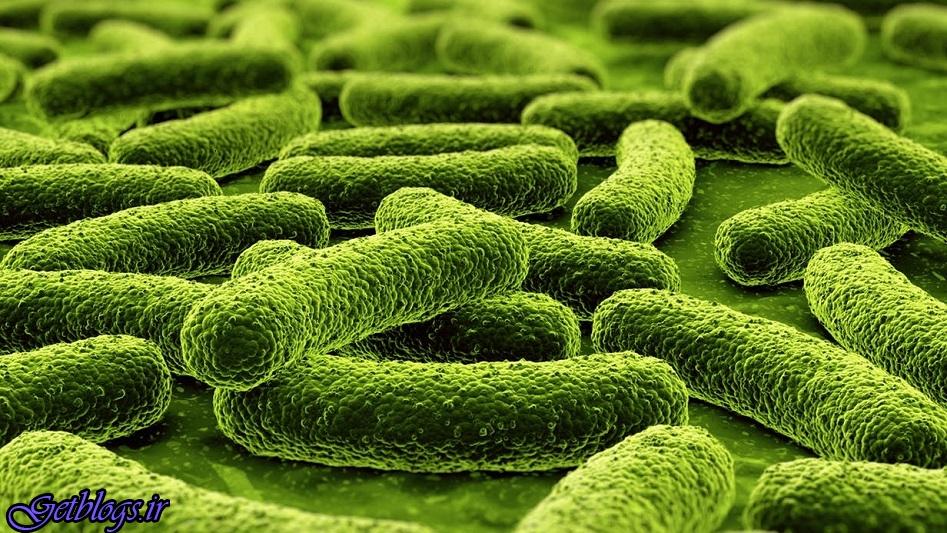 درمان یبوست با باکتری مهندسی شده است