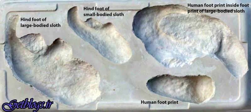 تصویر ، کشف فسیل صحنه نبرد انسانهای اولیه با یک تنبل عظیمالجثه