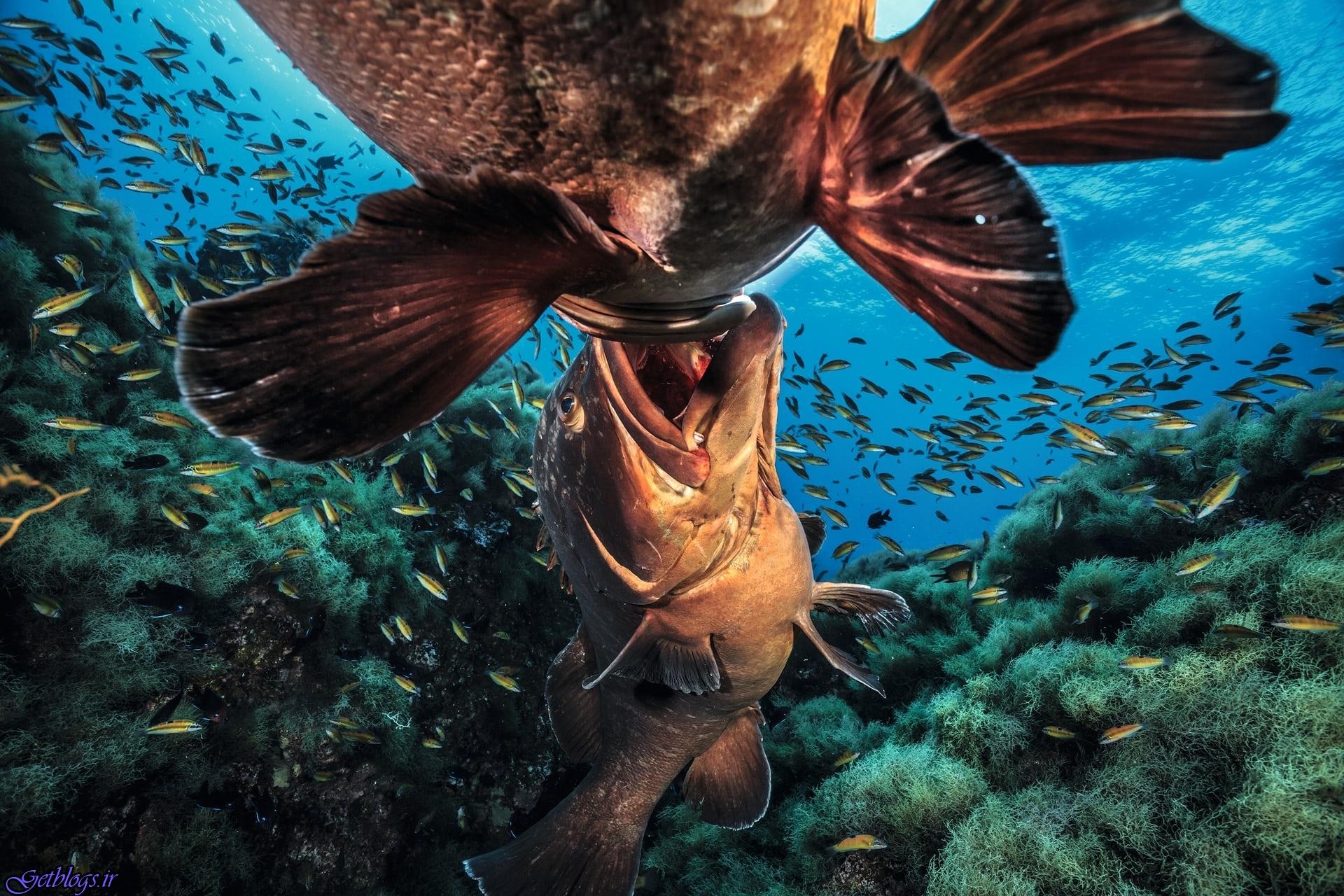 تصاویر ، منتخبی از عکسهای منحصربهفرد چند دهه از اعماق اقیانوس