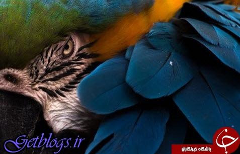 تصویری متفاوت از پرنده ماکائو