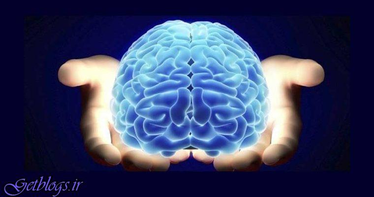 چربیهای بافایده جهت مغز را بشناسید