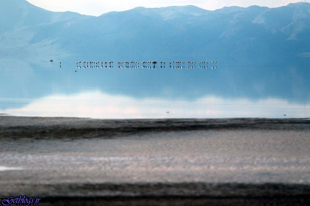 بازگشت فلامینگو ها به دریاچه ارومیه